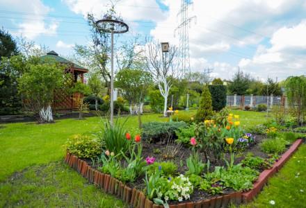 Rozkwitają ogródki działkowe