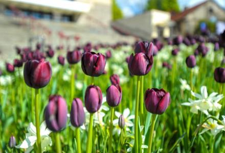 Na zewnątrz piękna pogoda, a tymczasem jaworznicki rynek opanowały kolory. Piękne kwiaty rozkwitły, a mieszkańcy sami mówią, że aż chce się żyć. Zapytaliśmy jak podoba im się zieleń na jaworznickim rynku.