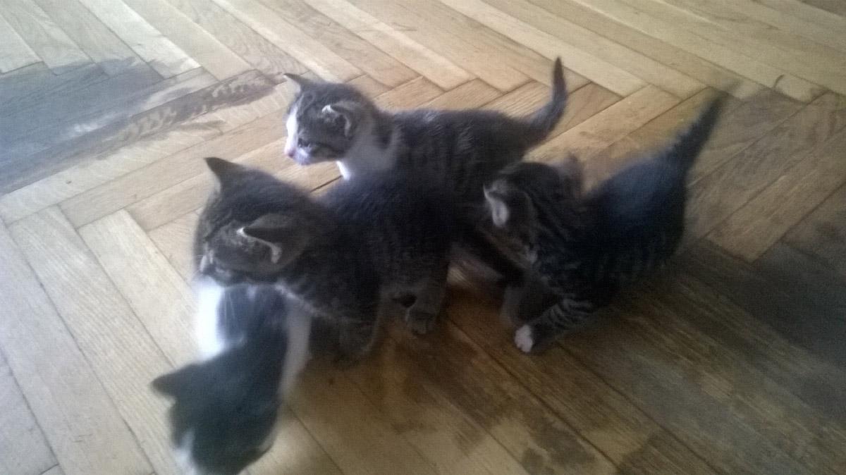 Cztery koty szukają nowego domu.