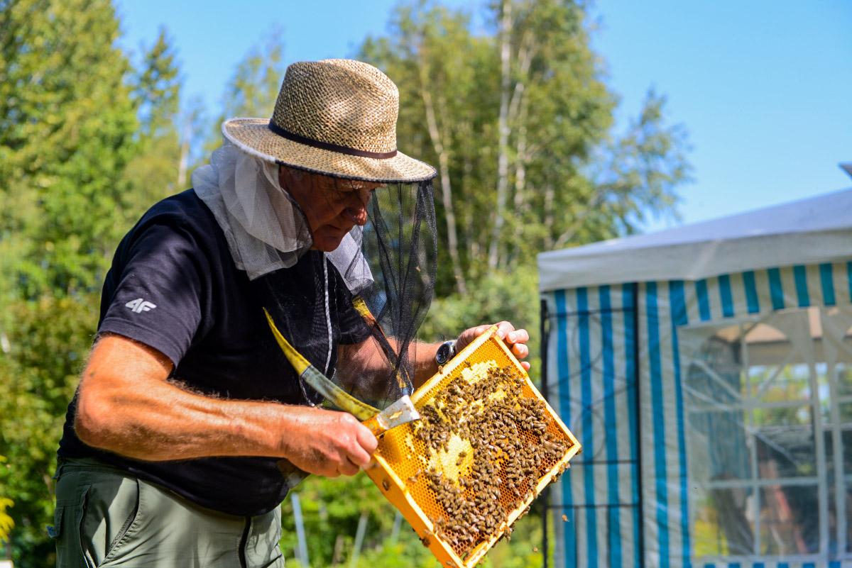 Pszczoły są zawsze w dobrym nastroju – opowiada pszczelarz Władysław Odrzywołek
