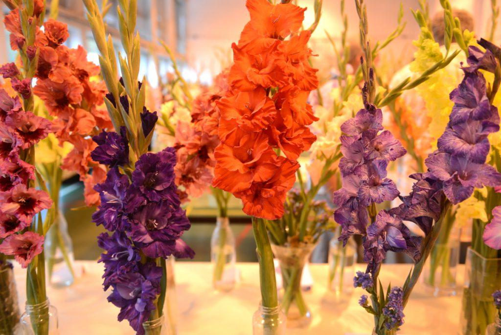 kwiaty Mysłowice 2016_19