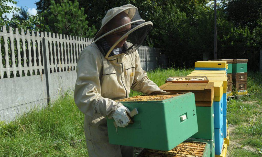 pszczoły Niedzieliska1