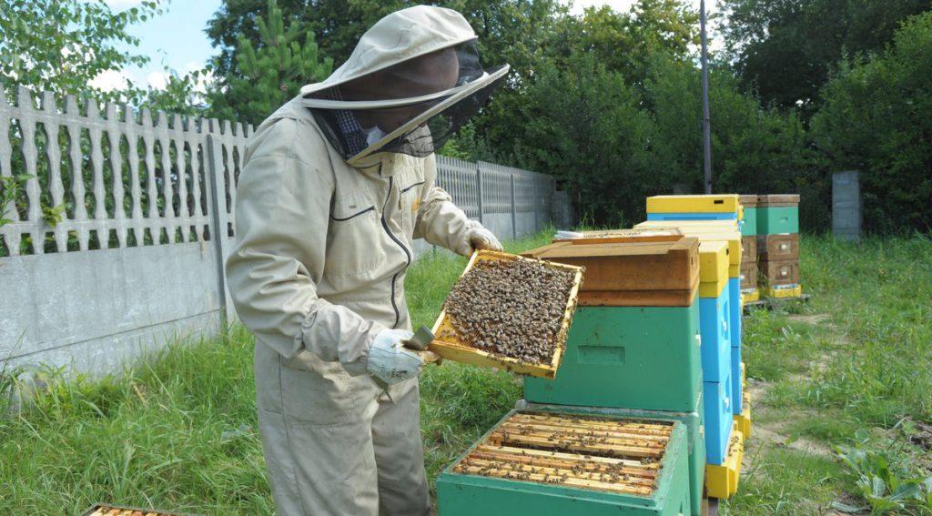 pszczoły Niedzieliska3