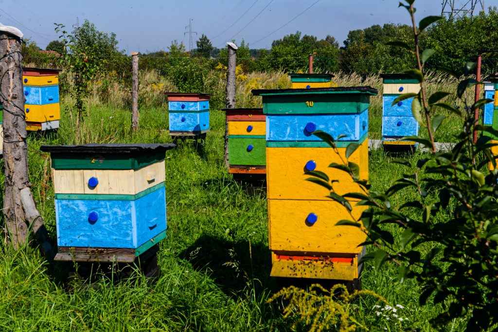 Pszczoly1
