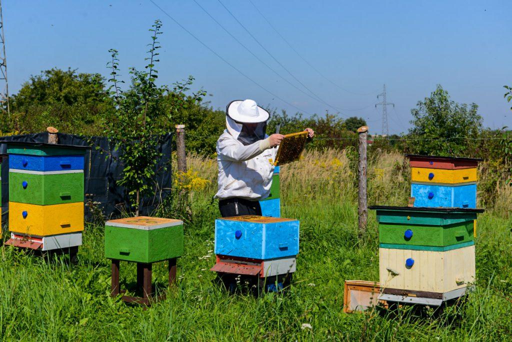 Pszczoly3