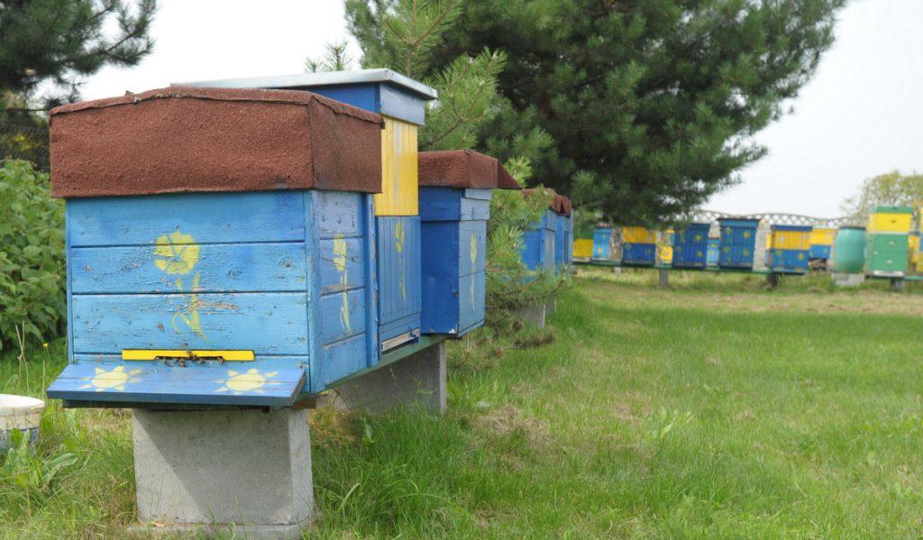 pszczoły1