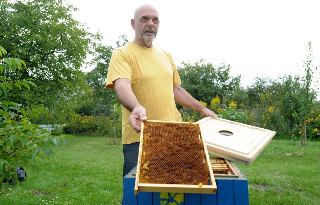 pszczoły2