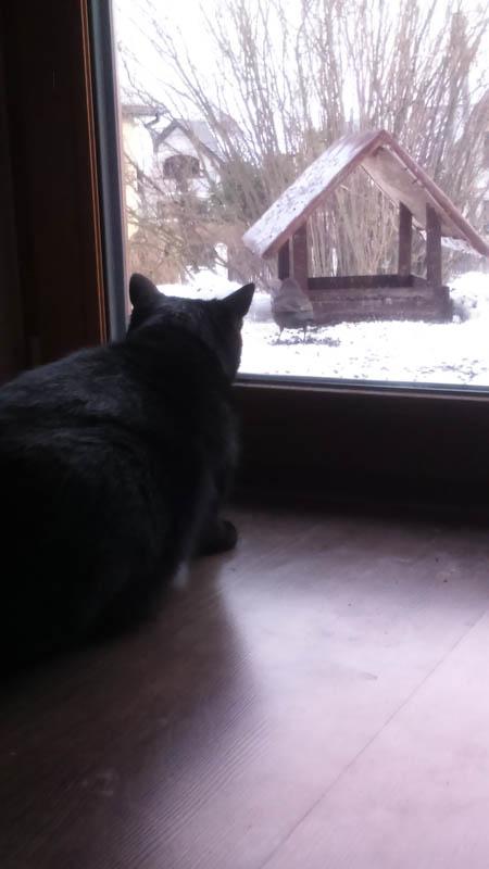 Kot Emilii Pisarek-Brzezickiej.