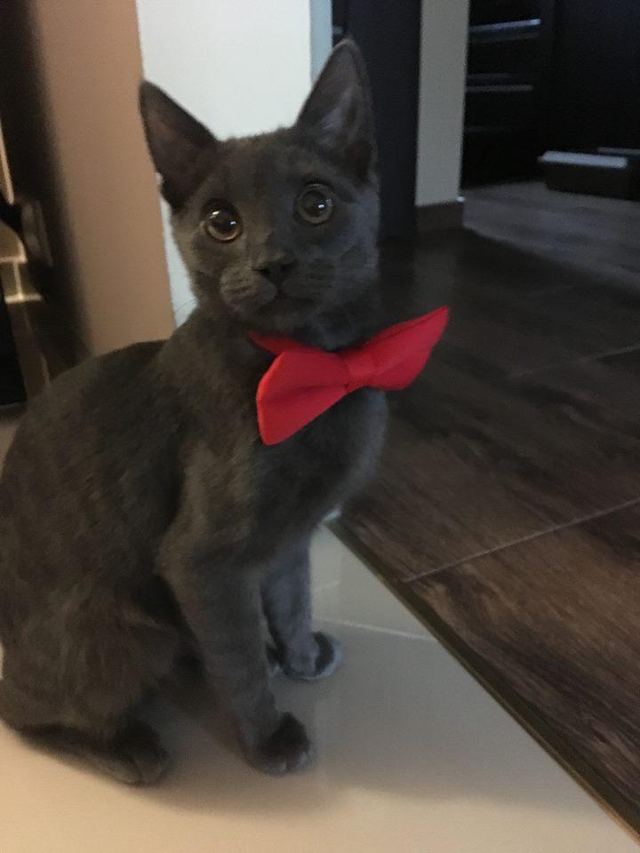 Galeria Kotów Część 3 Jaworznicki Portal Społecznościowy Jaw