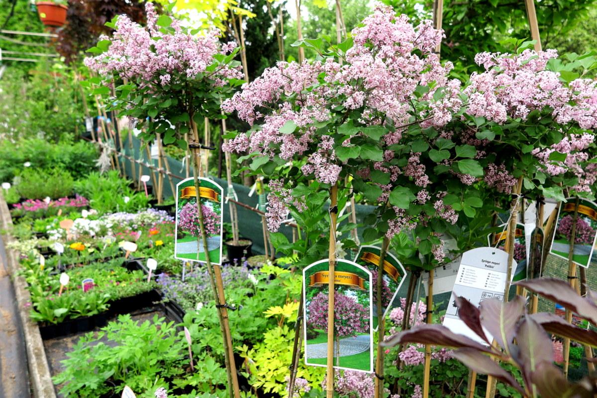 Najprostsza Droga Do Pięknego Ogrodu Jaworznicki Portal