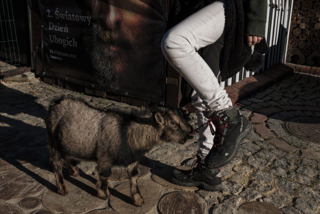 17 listopada. Wspólnota Betlejem. Światowy Dzień Ubogich. Na zdjęciu koziołek Julek, który próbuje rozwiązać sznurówki jednej z uczestniczek obchodów.
